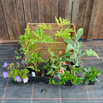 Crate Collection - Butterflies & Bees Plants, 2-Slat Crate