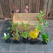 Crate Collection - Scented Plant Mix, 2-Slat Crate