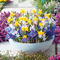 Pots of Colour Bulbs - Mix
