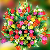 Tulip Bulbs - Dobies Fiesta Mixed