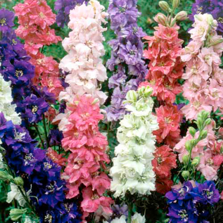 Florist's Cut Flower Plant Collection Pack of 72 Pot Ready Plants (value tray) - 18 of each variety