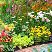 Perennial Plants - Choice Collection