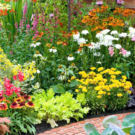 Perennial Plants - Cottage Garden Collection
