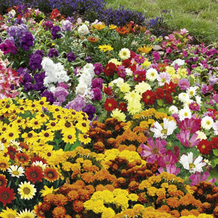 Extra Value Bedding Pack Plants - Lucky Dip