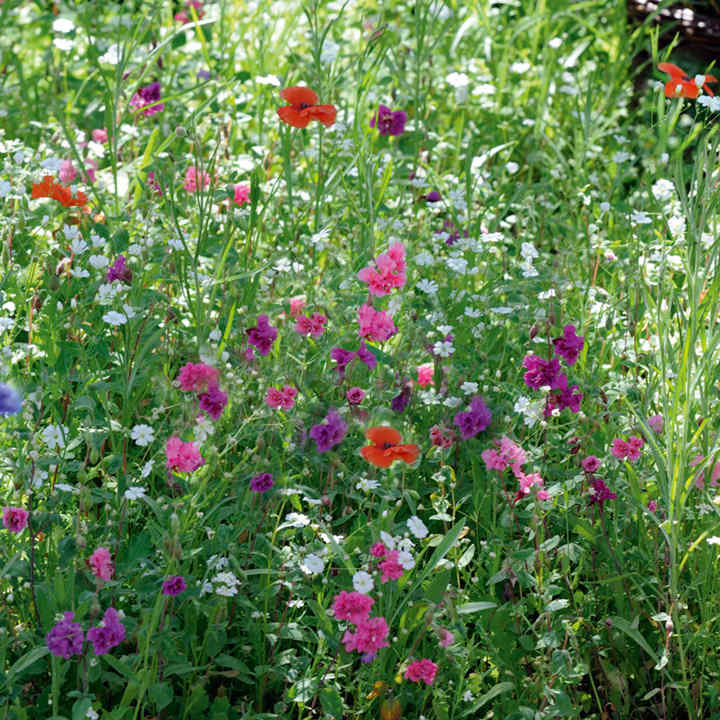 Flowering Mixture Seeds - Shade Mix