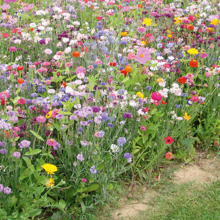 Flowering Mixture Seeds - Fast Flowering Annual Mix
