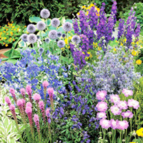 Potted Perennial Plants - Blue Collection
