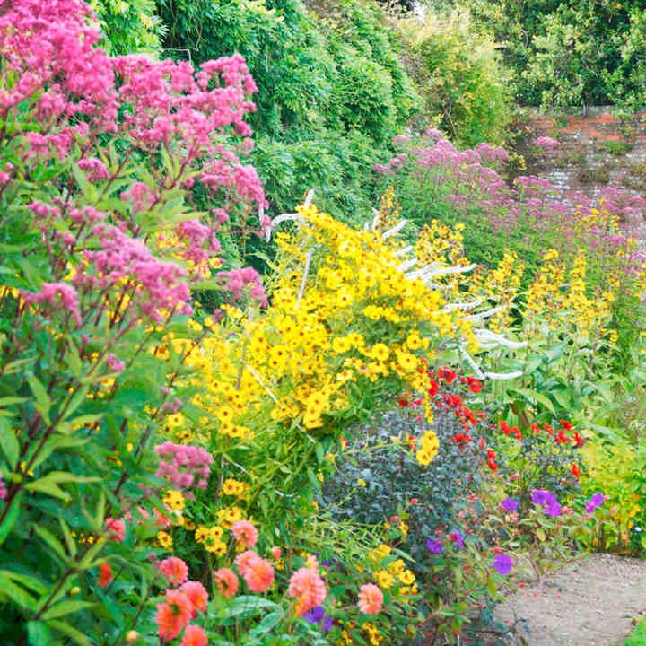 Perennial Plants - 2 Litre End of Season Clearance