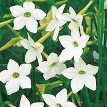 Dobies flowers for February