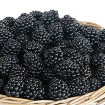 Blackberry Helen