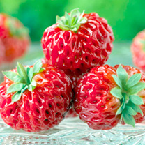 Fruit Trees & Bushes Strawberry Plants - Framberry