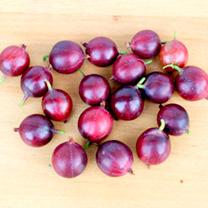 Gooseberry Plant - Captivator