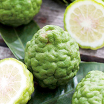 Citrus Tree - Kaffir Lime