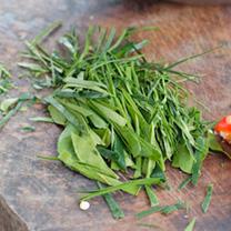 Kaffir Lime Plant