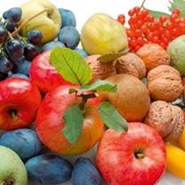 Fruit Trees - Lucky Dip