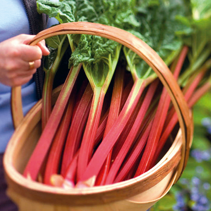 is rhubarb a fruit what fruits are healthy