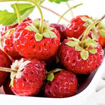 Strawberry Plants - Frau Mieze Schindler