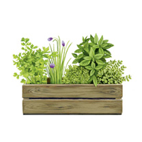 Personalised Crate Collection - Herbtastic