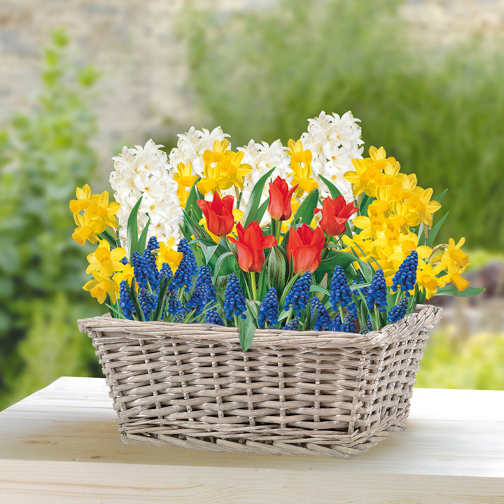 Flower Bulb Gift Baskets : Page not found dobies of devon