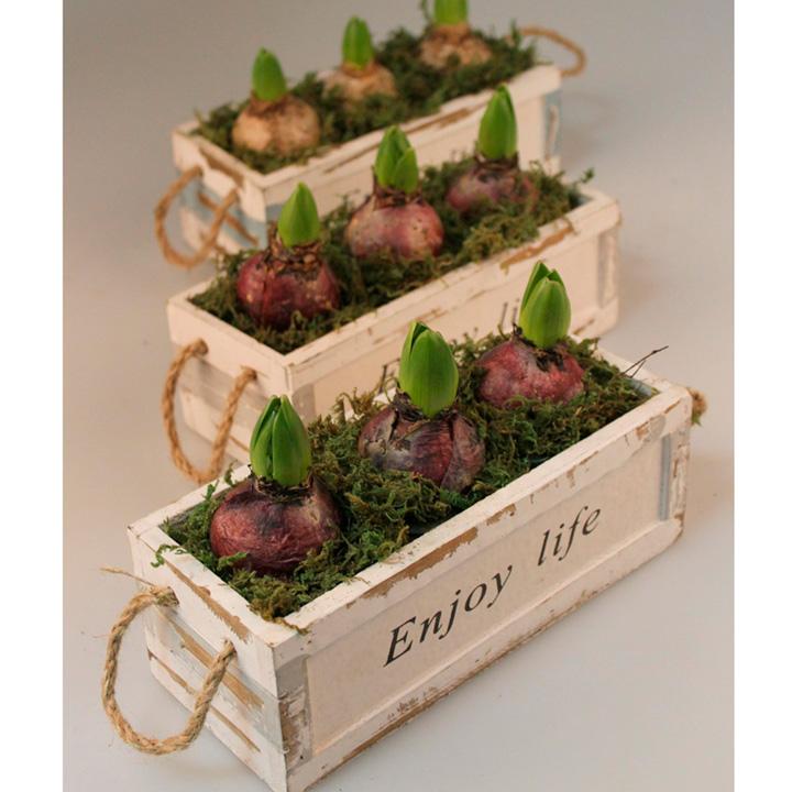 Hyacinth Chalk Box Planter