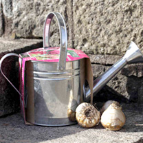 Zinc Watering Can and Hyacinth Bulbs