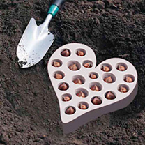 Plant-O-Tray Heart Preplanted Bulbs - Narcissus/Anemone