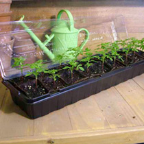 Windowsill Propagator Kits