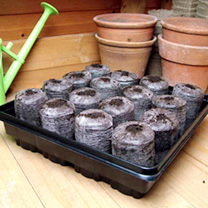 Three Jiffy 7 Vegetable Windowsill Propagators