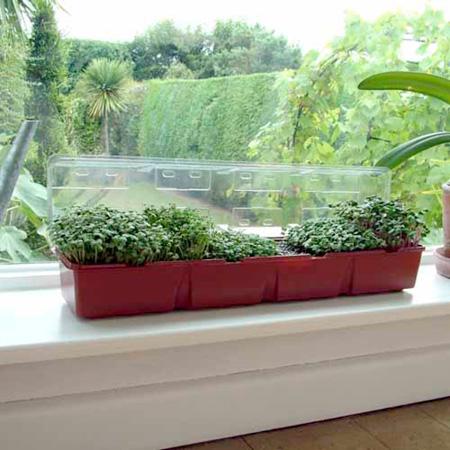 Windowsill Salad Seeds Kit