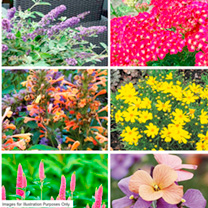 Perennial Plants Butterflies & Bees Collection - LUCKY DIP