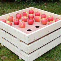 Apple Tray Holder and 6 Trays