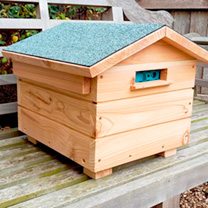 Bumblebee Villa and Colony plus Replacement Colony