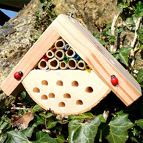 Bug Box & Bee Habitat