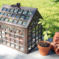 Cast Iron Miniature Greenhouse & Cuttings Tube Kit