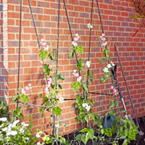 Easy Flower Grow Frame - 2.4 x 1.2m