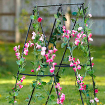 Easy Flower Grow Frame + FREE Sweet Pea Seeds