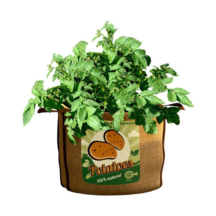 Vintage Potatoes Planters