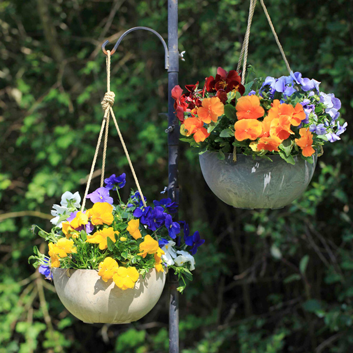 25cm Hanging Baskets