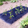 Long-lasting Multi-use Mulch Film - PICK and MIX