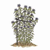 Plant Support Hoops x 6 60cm tall x 20cm dia