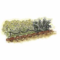 Scallop Plant Supports - 40cm x 85cm