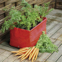 Carrot Patio Planters