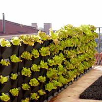 'Minigarden' Vertical Planter