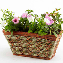 Patio Basket Planters
