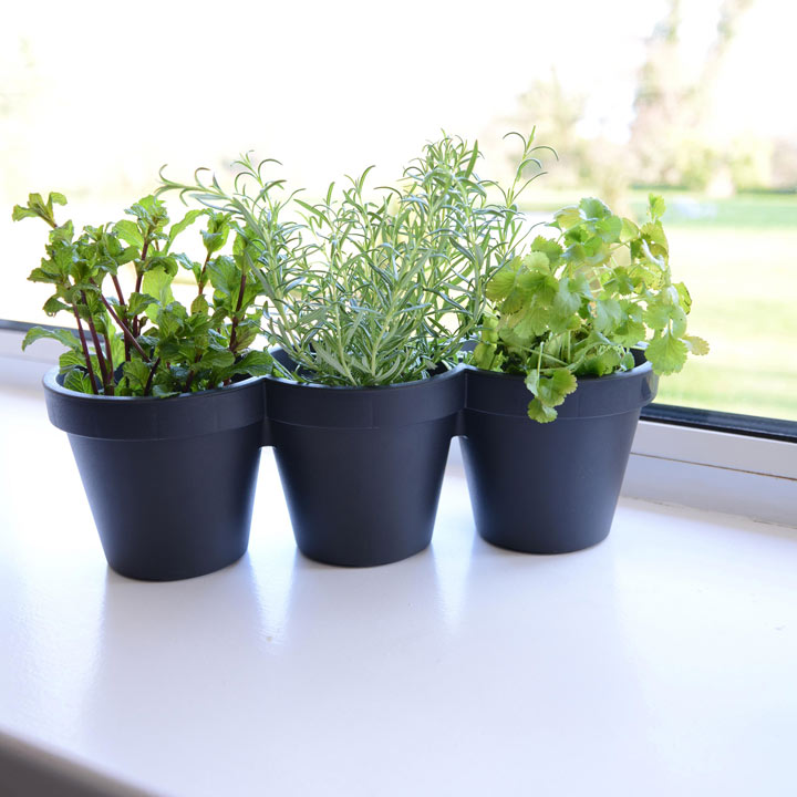 Herb Planter with Plants - 3 Lucky Dip Herb Plants