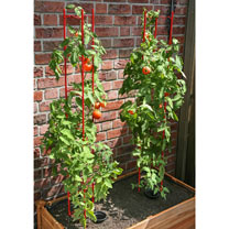 Large Vegetable Plant Support