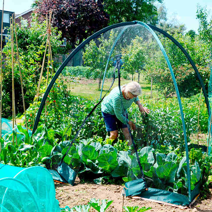 Popadome vegetable growing accessories vegetables - Cover crops for vegetable gardens ...