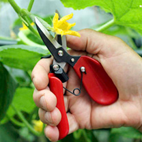 Floral Shears
