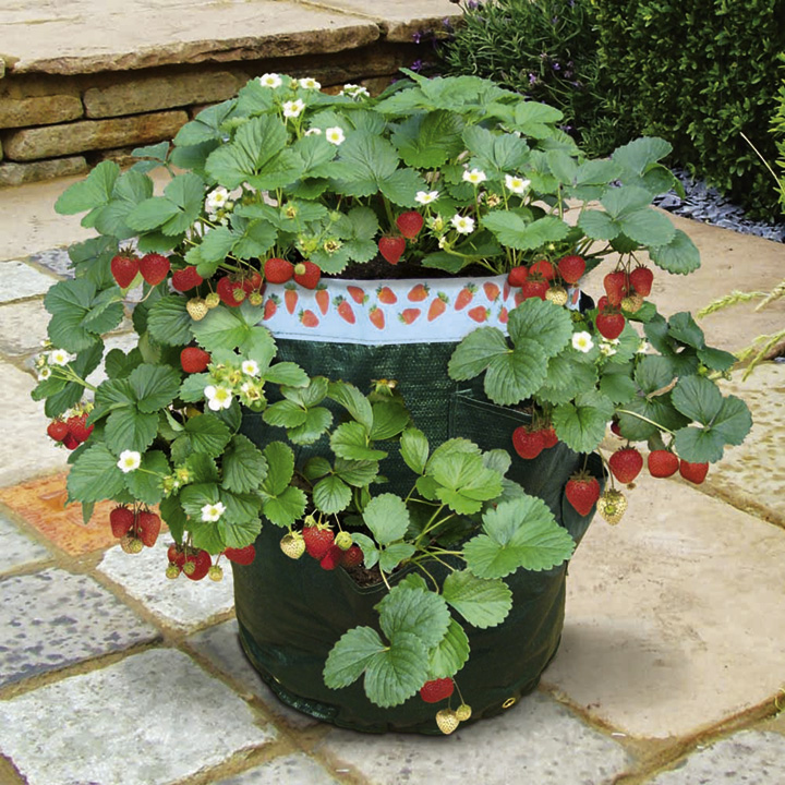 Strawberry Patio Kit