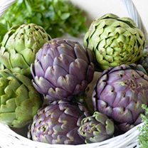 Artichoke Plants Twin Pack